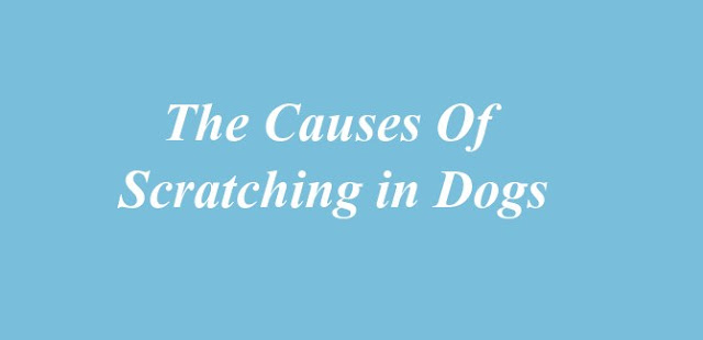 Causes of Scratching in Dogs