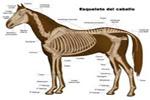 Esqueleto interno de un vertebrado