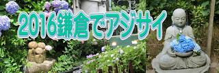 2016鎌倉でアジサイ