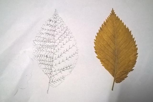 perchè cadono le foglie