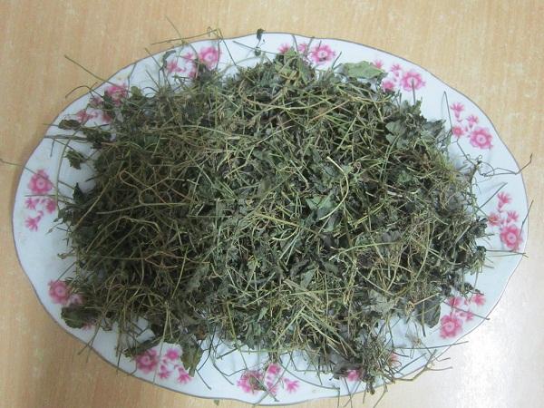 trà cổ giảo lam