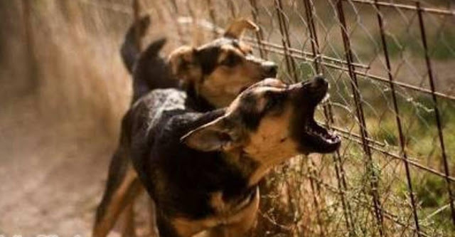 4 Suara Hewan yang Dipercaya Pertanda Datangnya Makhluk Halus