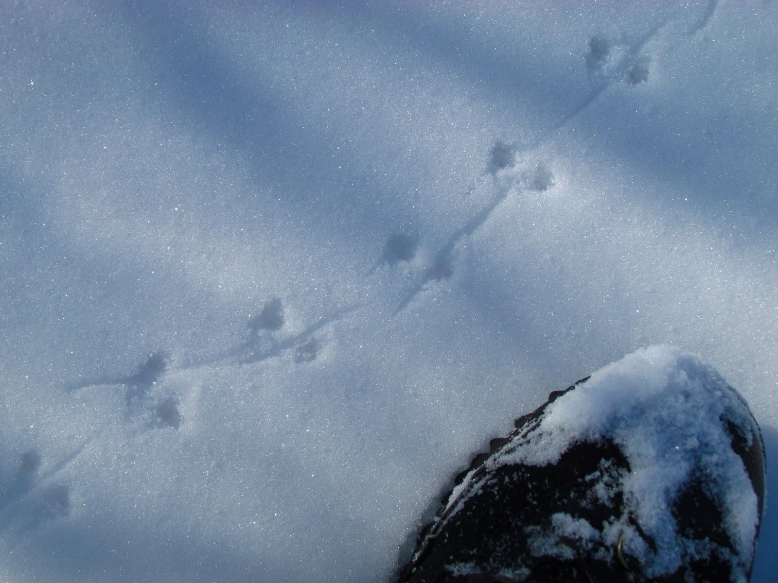 The Oakland Press Blogs Earths Almanac Wildlife Tracks A Gift Of