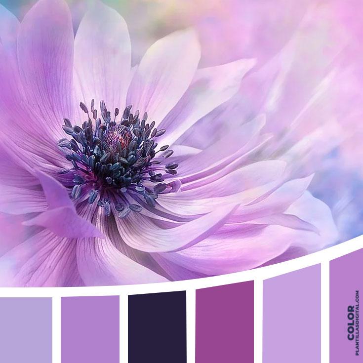 color_381