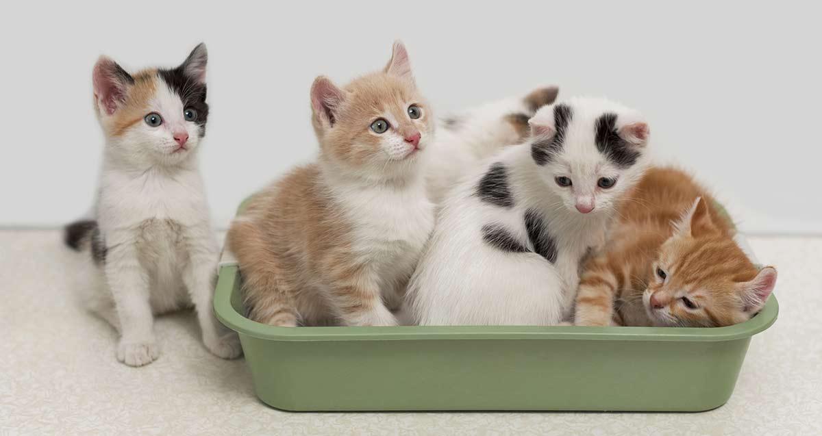 gatos caixa de areia