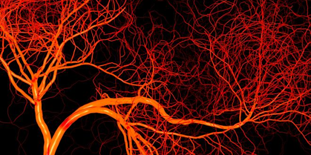 Specialized Blood Vessels May Lead to Novel Mesothelioma Therapy