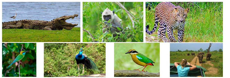 Wonder full slide show safari ride in Sri lanka