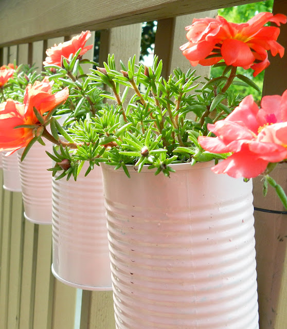 Create cute mini planters this spring with recycled tin cans spray-painted a lovely shade of pink!