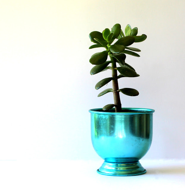 Indoor plant in a blue planter