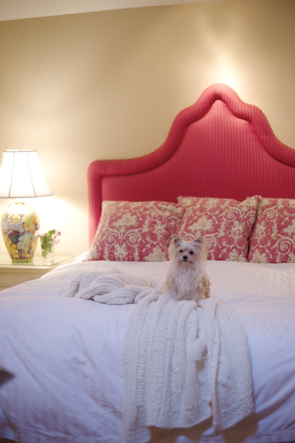 white bedding and coral headboard with dog on bed