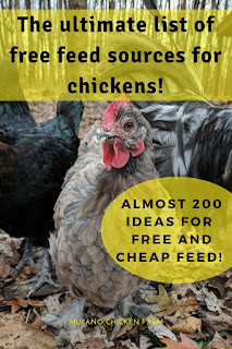 Feeding your chickens for free