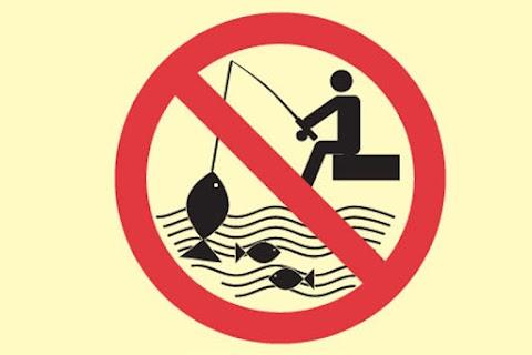 Halpusztulás miatt horgászati tilalmat rendeltek el két baranyai vízterületen