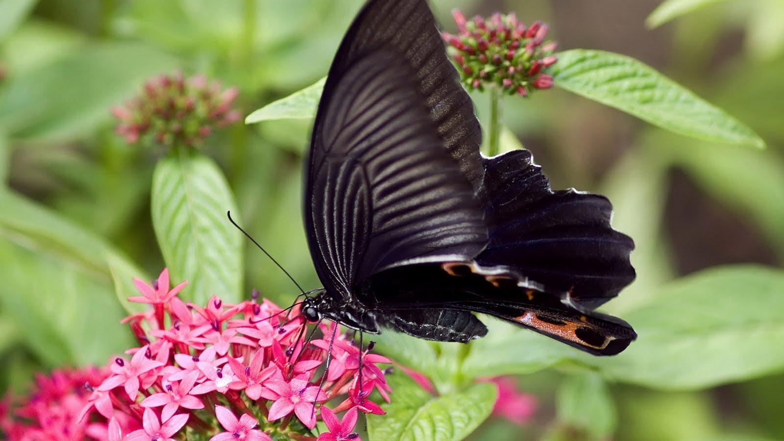 Böcek İlaçlama Servisi Suadiye