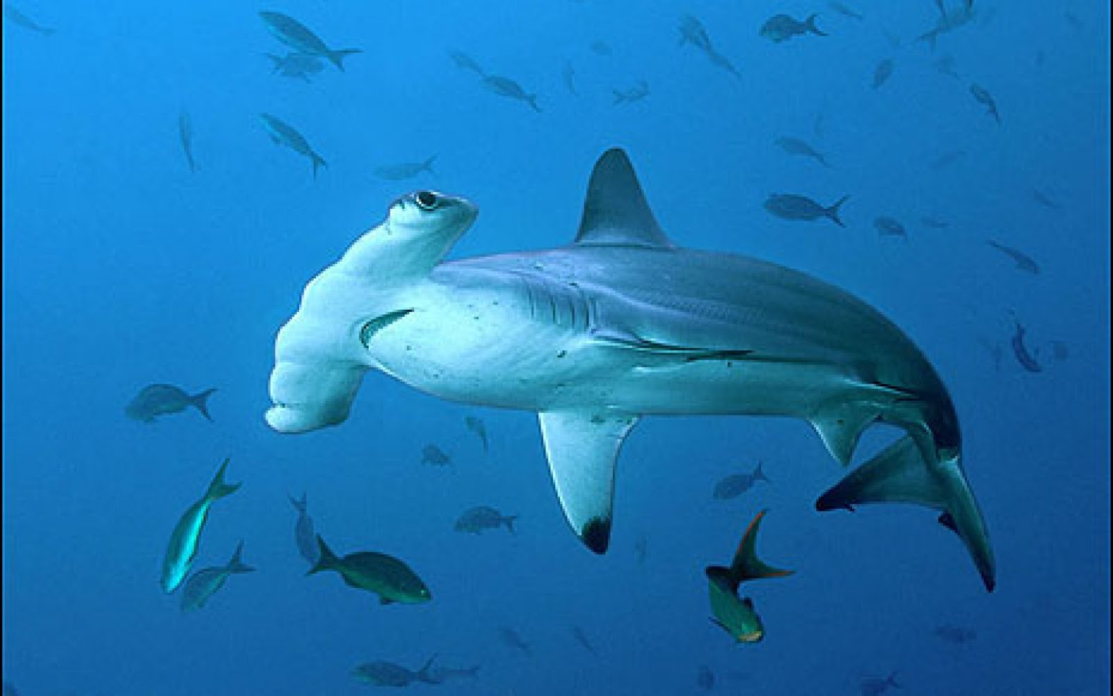 Top 27 Sea Animals Wallpapers In Hd: Underwater Sea Creatures And Other Animals Wallpapers