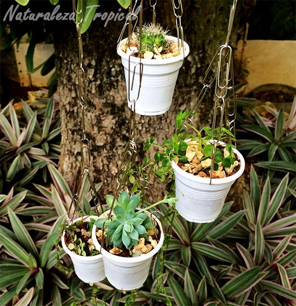 Vista de las plantas en las pequeñas macetas de nuestro sonajero