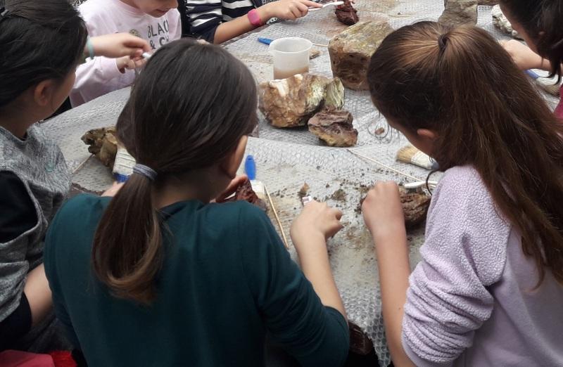 Συνεχίζονται οι εκπαιδευτικές δράσεις στο Απολιθωμένο Δάσος Λέσβου!