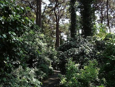 Compton Acres Woodland Garden Dense planting Green Fingered Blog