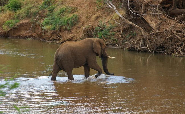 www.xvlor.com Limpopo National Park in Gaza, Mozambique