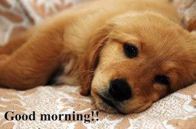 Cute puppies Images saying good morning