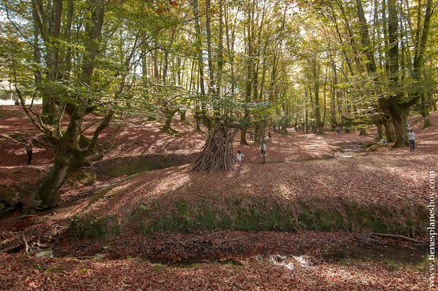 Hayedo de Otzarreta otoño euskadi senderismo excursiones