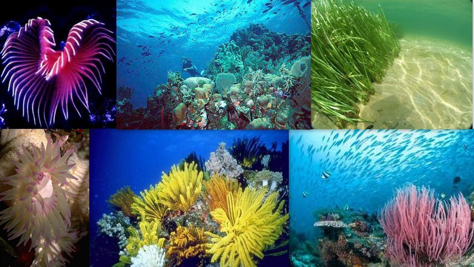 Marine Biome Pictures