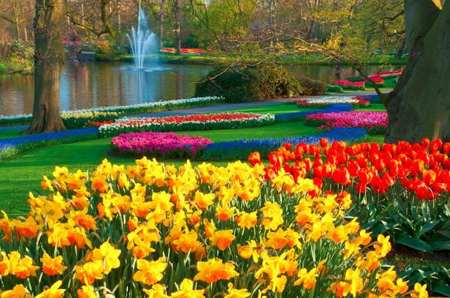 Công viên Keukenhoff tại Hà Lan là cảm hứng cảnh quan dự án Lavila.