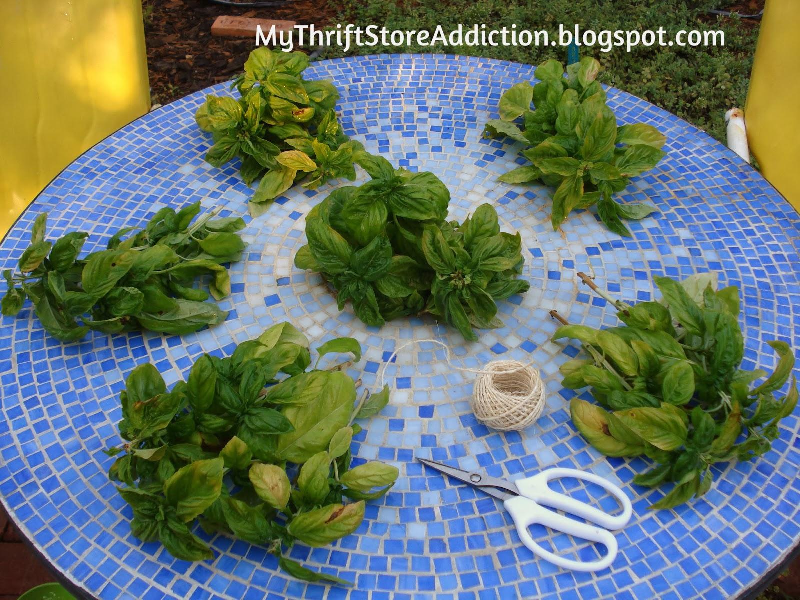 drying organic herbs