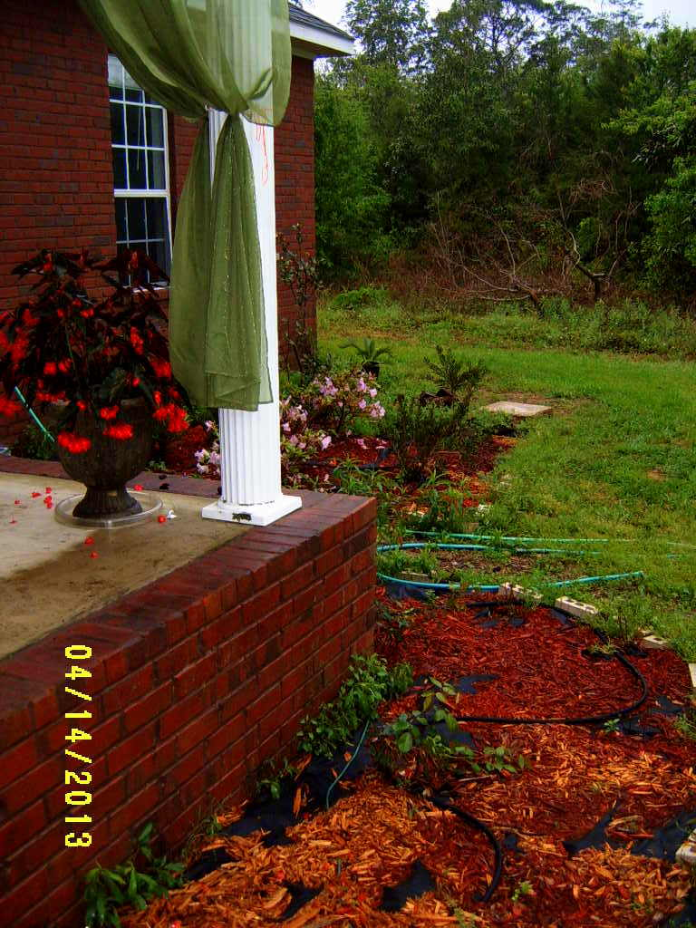 Alabama Rose and Flower Garden from a Non-Green Thumb: Wanna See How ...