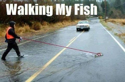 funny walking my fish meme joke picture