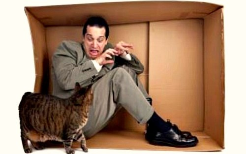 Elurophobia-Fear-of-cats.jpg
