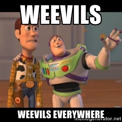 Weevils, weevils everywhere meme