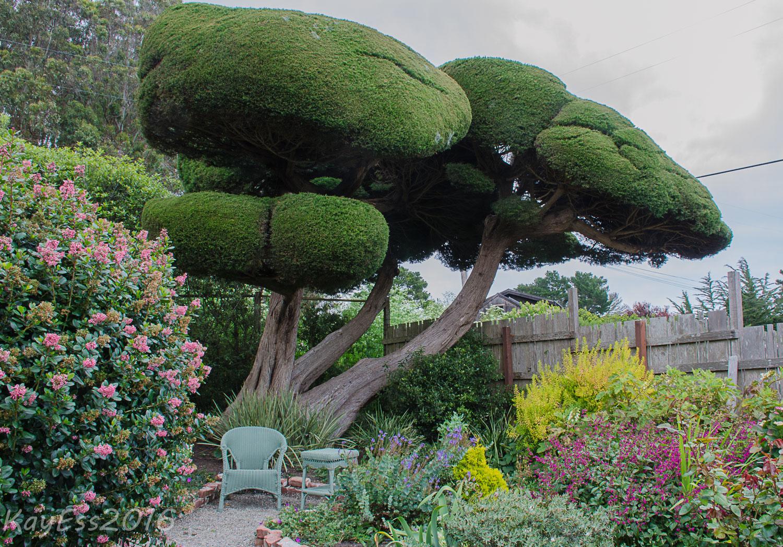 Gardenbook marin county open garden bolinas for Simply garden maintenance