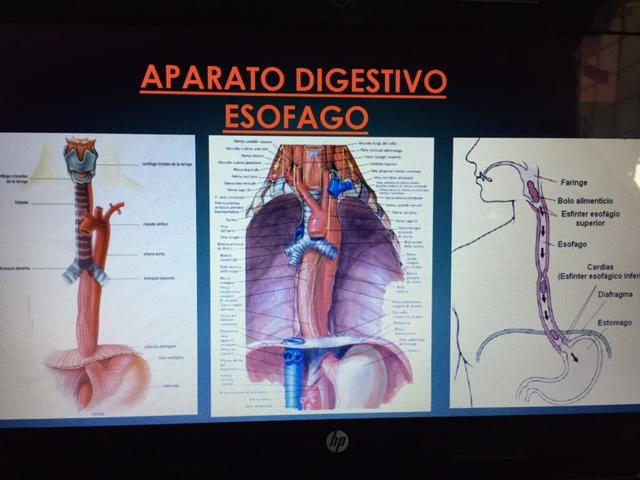 Blog 3º Bachillerato A: POWER POINT DE ANATOMIA Y FISIOLOGIA BASICA ...