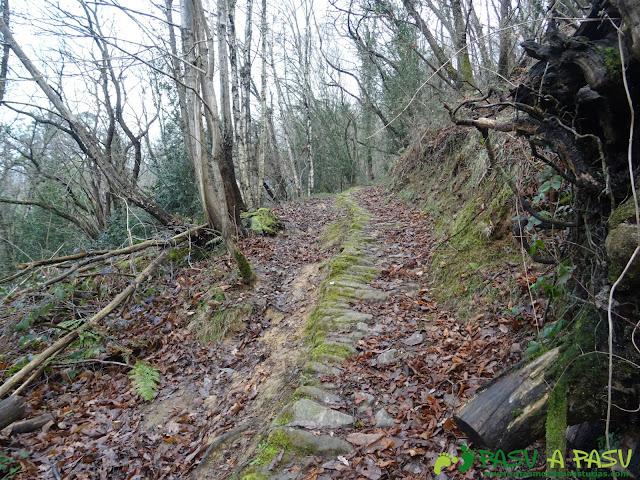 Camino por el bosque subiendo a Ceacal
