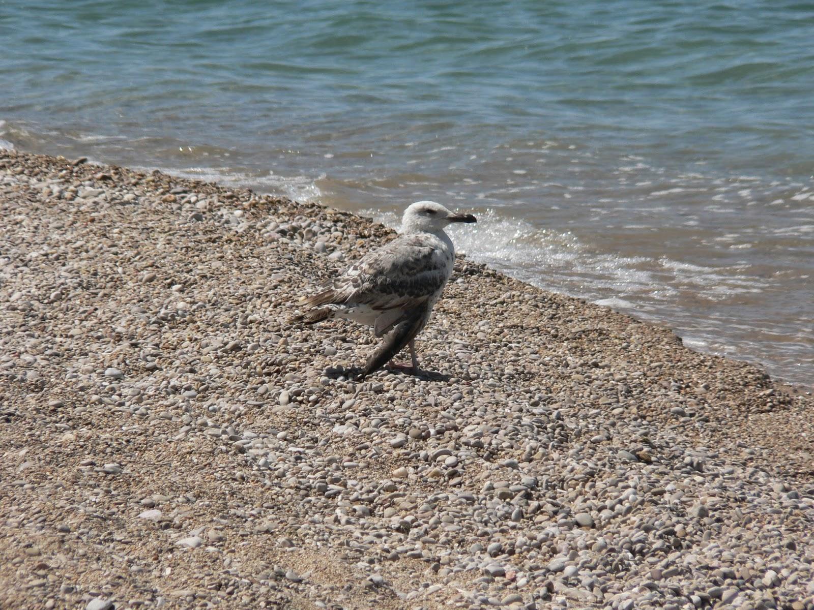 Чайка-на-Море