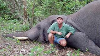 Δικαιοσύνη; Εκδίκηση της φύσης; Σκοτώθηκε από ελέφαντα ο δολοφόνος άγριων ζώων...