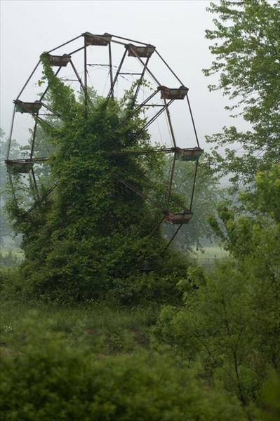 incredible ferris wheel in the wild