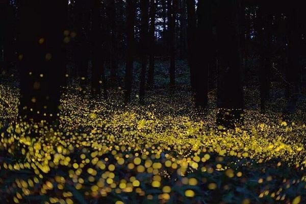 Cahaya Kunang-kunang