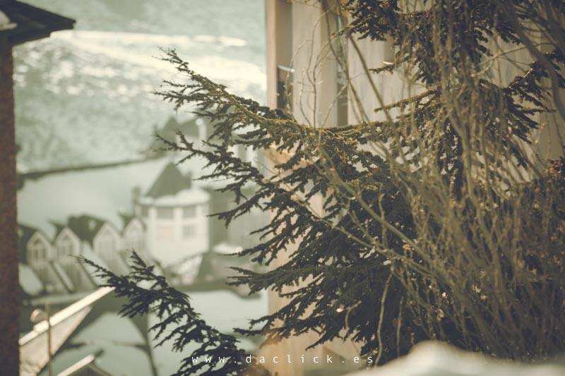 pino nevado
