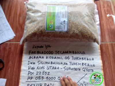 Benih Padi Pesanan FAEBUADODO TELAUMBANUA Nias Utara, Sumut.   Benih Sebelum di Packing.
