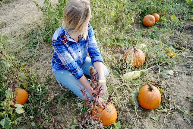 pumpkin patch 2