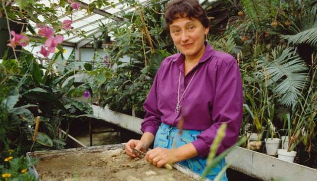لين مارغوليس