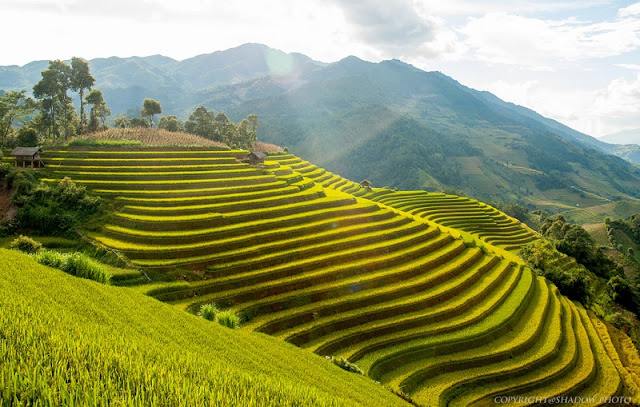 The highlight of Mu Cang Chai terraced field festival to open on Sept 25