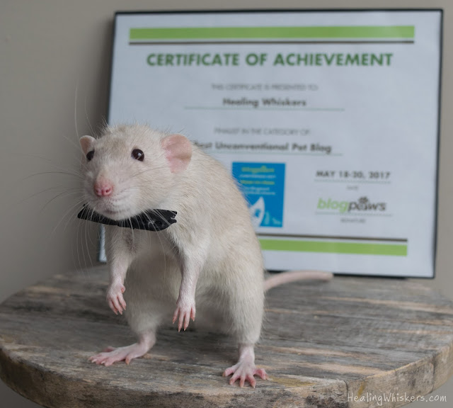 Oliver in front of our certificate of achievement in a bowtie