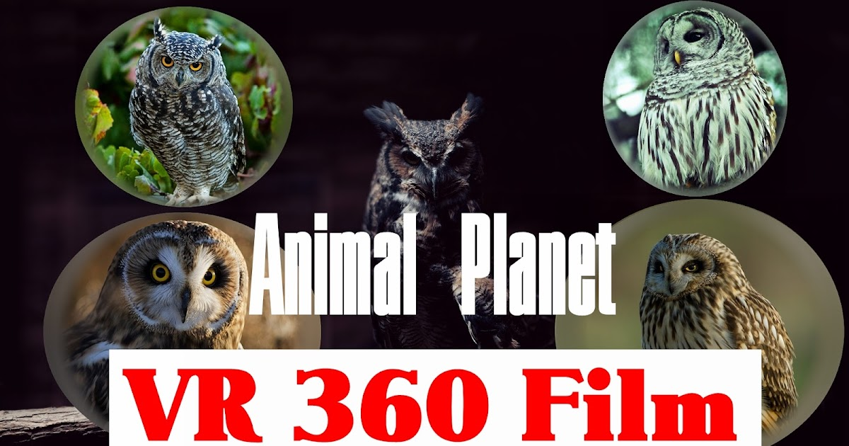 vr 360 animal planet - owl storytelling film 3d animation