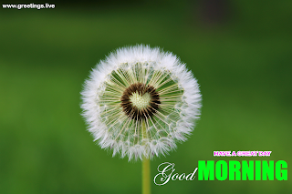 good morning greetings Dandelion flower heart wishes