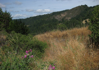 View of a tree-lined canyon with pink flowers in the foreground, from the summit of Sweetwater Springs Road, Sonoma County, California