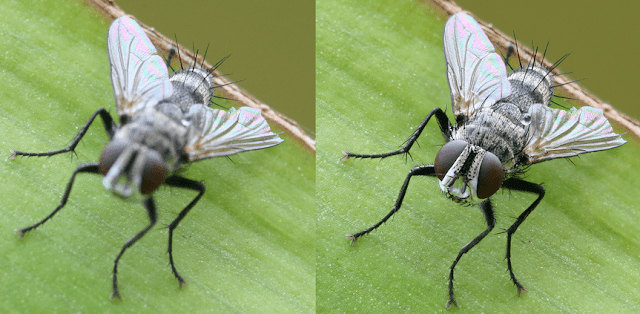 A fly photo with sharpening process