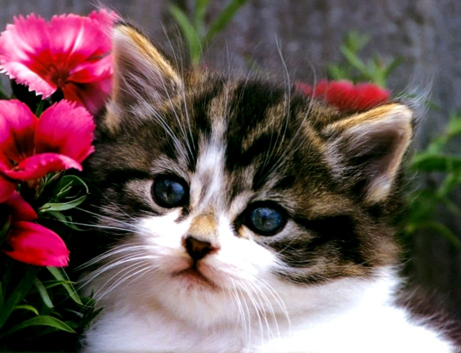 Cat Kittens Cute Images Background Wallpapers Image