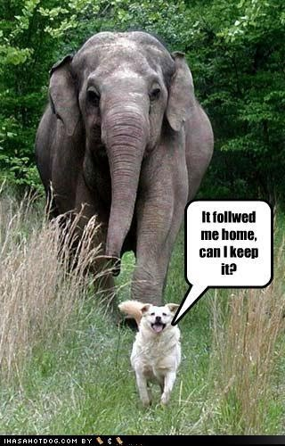 Elephant jokes - photo#47